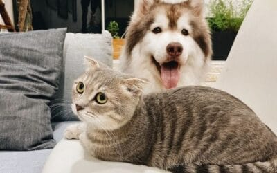 Hogyan Szoktassuk Össze a Kutyát a Macskával?