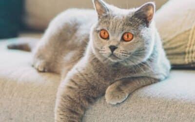 Biztonságos környezet cicáknak: Tippek és Tanácsok